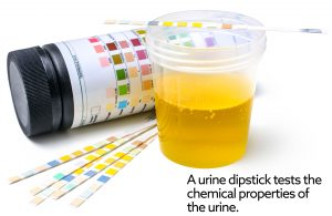 Urine test for cats