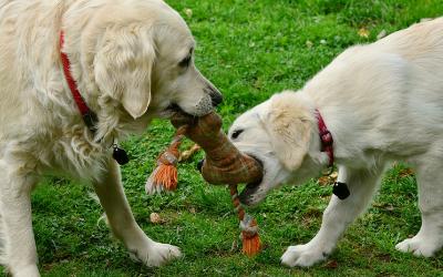 Proper Etiquette at the Dog Park